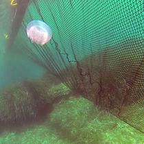 Barriera anti-meduse / galleggiante / per acque calme
