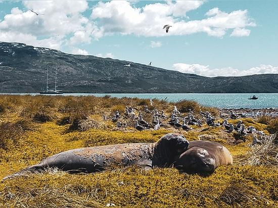 Aneddoti dai fiordi di Patagone