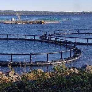 gabbia per pesci per piscicoltura