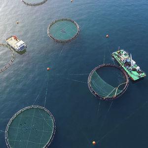 gabbia per pesci per acquacoltura / in plastica / flottante