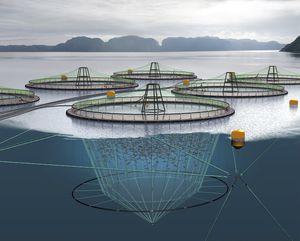 rete per acquacoltura / per gabbia per pesci