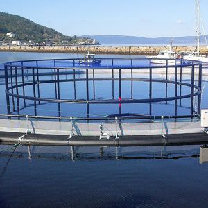 gabbia per pesci per acquacoltura / in plastica / in HDPE / rotonda