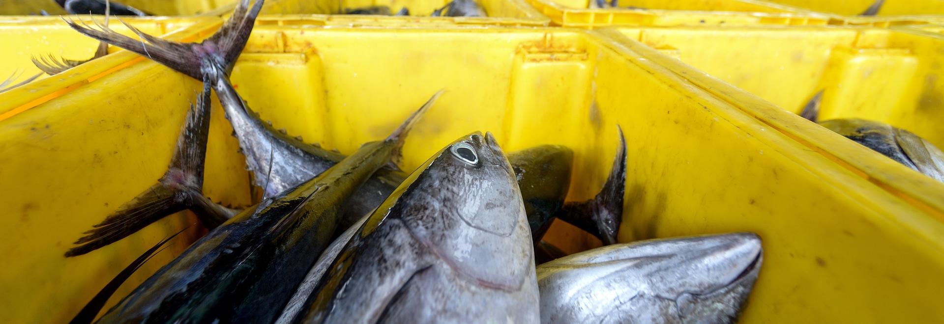 Energia pulita in acquacoltura: utilizzare la tecnologia per coltivare pesci sani