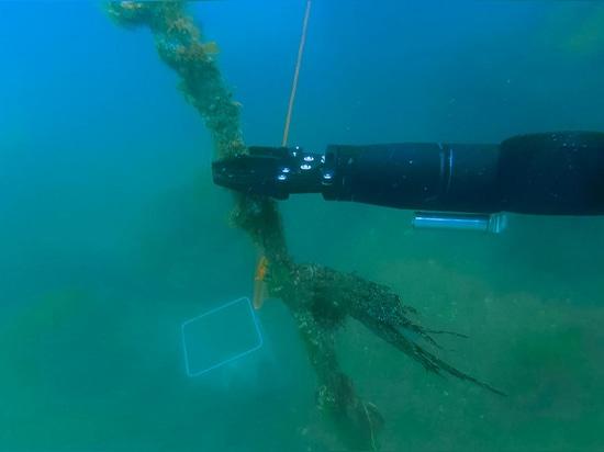 Blueprint Lab sviluppa e produce manipolatori sottomarini compatti, agili e resistenti, tutti elettrici.